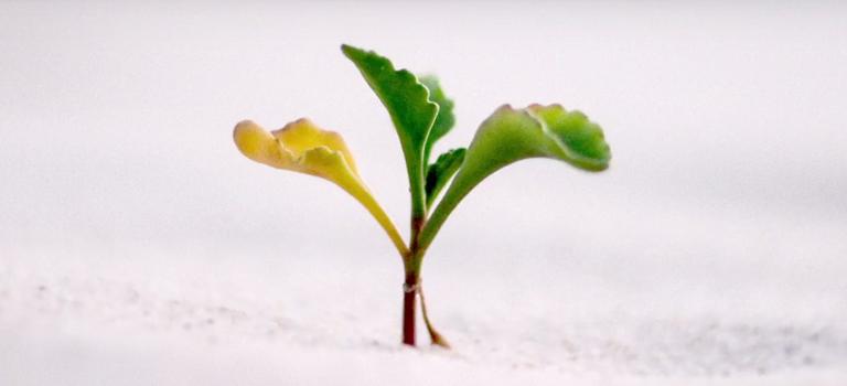 La semilla que crece | Marcos 4:21-34